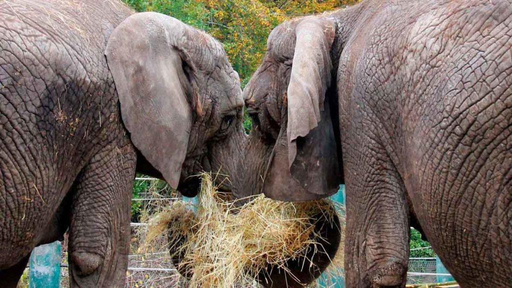 Elefanter i Aalborg zoo